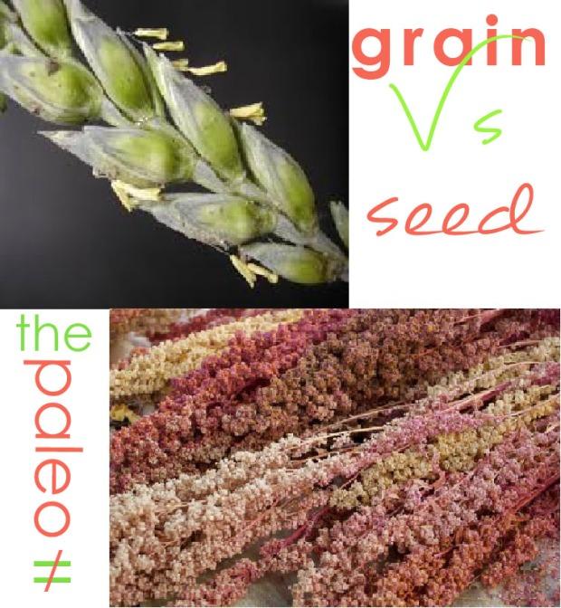 grain vs seed paleo